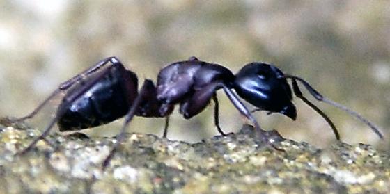 fliegen die neue generation der insektenbek mpfung. Black Bedroom Furniture Sets. Home Design Ideas